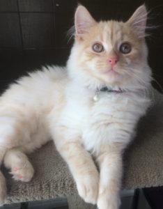 Adoption Kittens/Cats!