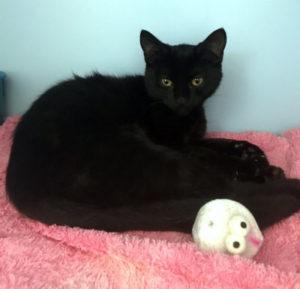 Kitten for Adoption: Monkey
