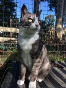 Cat for Adoption: George