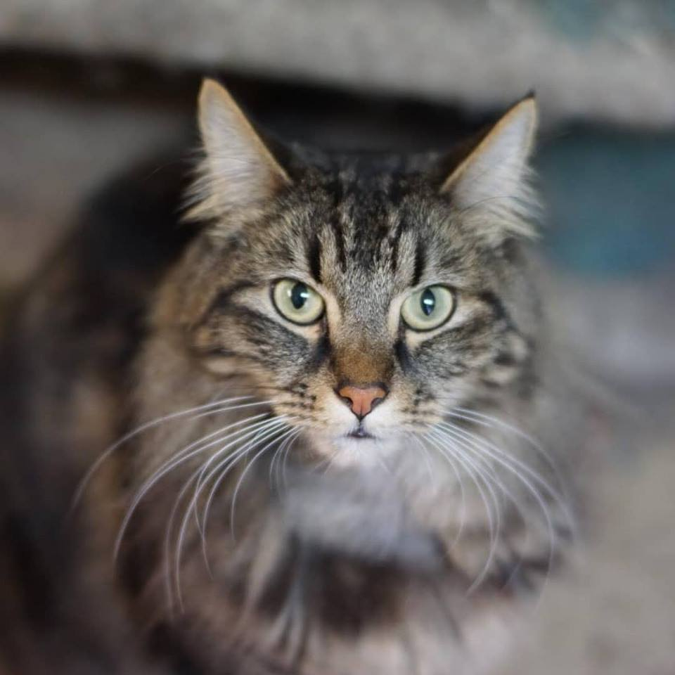 Adoptable Cats and Kittens | NYC | Adoption Center| ASPCA